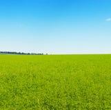 蓝色域绿色天空 图库摄影