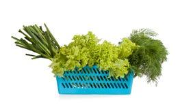蓝色塑料篮子用年轻大蒜、莴苣和莳萝 库存图片