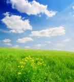 蓝色多云域草绿色天空 库存照片