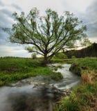 蓝色多云域草绿色早晨天空春天 一条美丽如画的河 库存图片
