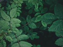 蓝色多云域草绿色早晨天空春天 库存图片