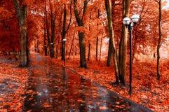 蓝色多云秋天域横向偏僻的天空结构树黄色 红色秋天树和秋天叶子在湿小径在公园胡同在雨以后 免版税库存图片