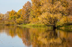 蓝色多云秋天域横向偏僻的天空结构树黄色 在湖的秋天五颜六色的叶子有美丽的 免版税库存图片
