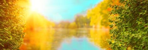 蓝色多云秋天域横向偏僻的天空结构树黄色 秋天公园、湖、叶子和太阳 图库摄影