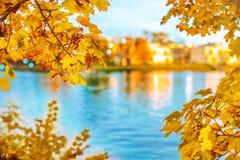 蓝色多云秋天域横向偏僻的天空结构树黄色 秋天都市风景 从公园的看法横跨 库存图片
