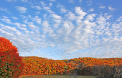 蓝色多云秋天域横向偏僻的天空结构树黄色 库存照片