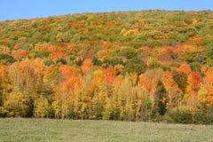 蓝色多云秋天域横向偏僻的天空结构树黄色 免版税库存照片
