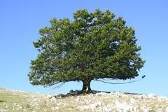 蓝色好的天空surraounding的结构树 免版税库存图片