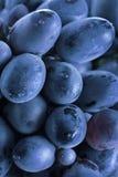 蓝色字符串葡萄 免版税库存照片