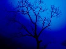 蓝色孤零零树 免版税图库摄影