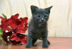 蓝色小猫俄语 库存照片