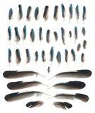 蓝色尖嘴鸟在白色隔绝的翼羽毛 库存照片