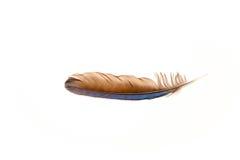 蓝色尖嘴鸟羽毛 图库摄影