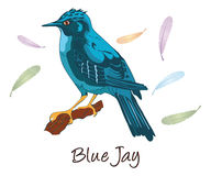 蓝色尖嘴鸟,彩色插图 库存图片