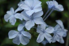 蓝色庭院 库存图片