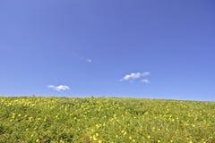 蓝色开花的草天空 免版税库存图片