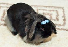 蓝色弓兔子 免版税库存图片