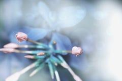 蓝色抽象自然 库存照片