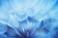 蓝色抽象蒲公英花背景,与软的foc的特写镜头 免版税库存图片