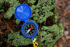 蓝色指南针在一个绿色树桩说谎在森林里 免版税图库摄影