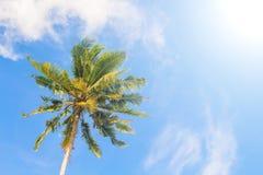 蓝色掌上型计算机天空结构树 热带豪华旅行横幅背景的自然田园诗照片 库存照片