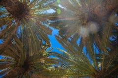 蓝色掌上型计算机天空结构树 背景节假日热带海报的夏天 免版税库存图片