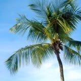 蓝色掌上型计算机天空结构树 免版税库存照片