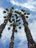 蓝色掌上型计算机天空高大的树木 库存照片