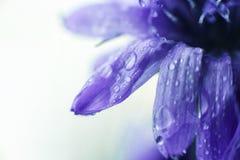 蓝色接近的花 矢车菊 图库摄影