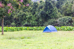 蓝色旅游帐篷在森林里 库存照片