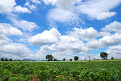 蓝色日天空 库存图片