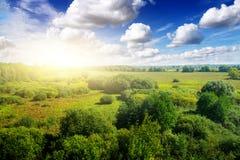 蓝色日森林金天空晴朗下面 免版税库存照片