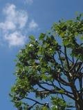 蓝色明亮的天空结构树 免版税库存照片