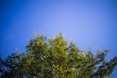 蓝色明亮的天空 库存照片