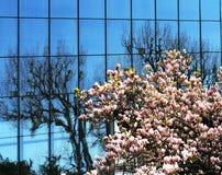 蓝色春天视窗 免版税图库摄影