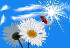蓝色春黄菊ladybi天空 图库摄影