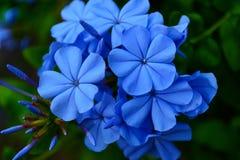 蓝色朝代 图库摄影