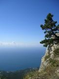 蓝色杉木被选拔的天空结构树 库存图片