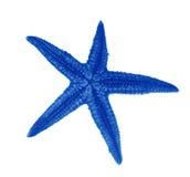 蓝色查出的海星白色 库存图片