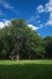 蓝色树丛橡木天空 图库摄影