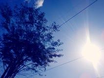 蓝色树太阳发光天空剪影 库存图片