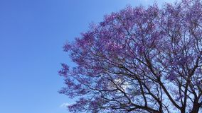 蓝色树荫本质上 免版税库存图片
