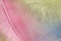 蓝色桃红色和yelloww用羽毛装饰背景,关闭  免版税库存照片