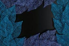 蓝色框架叶子紫色 库存照片