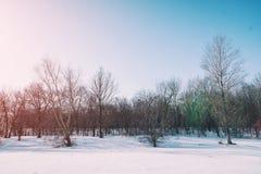 蓝色森林天空冬天 免版税库存图片