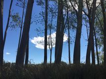 蓝色森林天空 免版税库存照片
