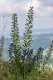 蓝色植物 库存照片