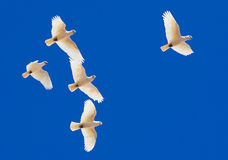 蓝色模仿天空下 免版税图库摄影