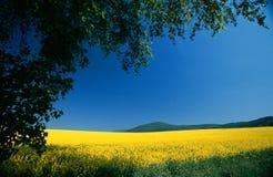 蓝色横向黄色 免版税库存图片