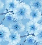 蓝色樱桃佐仓花花卉蓝色数字式艺术无缝的样式纹理背景 库存图片